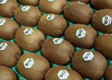 Kiwifruit 3
