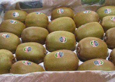Kiwifruit 4